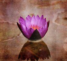 Vintage Style Lotus Flower by Carol Vega
