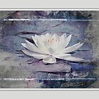 White Water Lily Pasteled by Vickie Emms