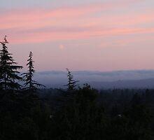 Twilight in Santa Rosa by Martha Sherman