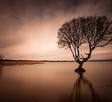 The Kenfig Tree Porthcawl by leightoncollins