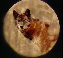 Timberwolf in Moon by Winona Sharp