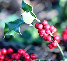 festive Christmas holly by Dawna Morton