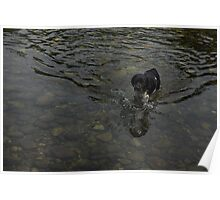 Crystal Clear Water Play - the Splashing Puppy Poster