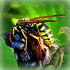 Wasp on Blackberry by ©The Creative  Minds
