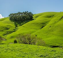 Rolling Hills by Chris Kean