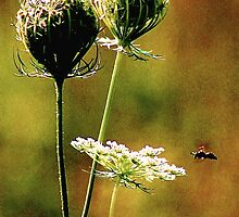 Queen Anne's Lace Digital 2 by Gilda Axelrod