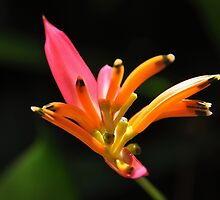 Exotic Flower by JDWoW