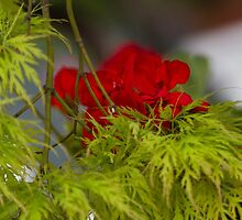 flower and maple by spetenfia