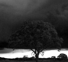 Tree Against Night Sky in Black and White by Jacqueline Longhurst