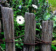 Secret Garden by le-pamplemousse