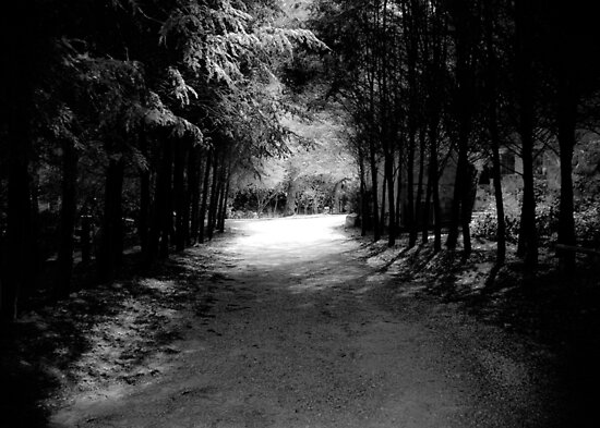 Our Path is Always Darkest Before the Light by Marcelle Raphael