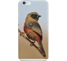 Blackcheeked Waxbill - Finding Thorny Solitude iPhone Case/Skin