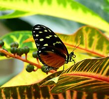 Butterfly on Yellow Tropical Plant by artbybutterfly