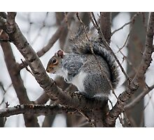 Squirel in a Tree Photographic Print