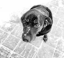 Puppy Dog Eyes by ethanbeirne