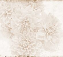 Whispers Of Dahlias  by Sandra Foster