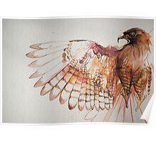 hawk I Poster