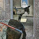The donkeys, Santorini, Greece by Matt Mawson