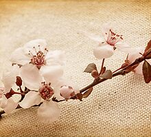 Vintage Blossoms by Caitlyn Grasso