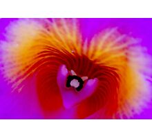 Taz - Orchid Alien Discovery Photographic Print