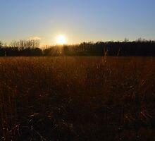 Sunset Field by Mark Hudon