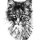 Billie the Cat by Coralie Plozza
