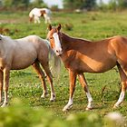 Beautiful horses sharing a look. by Erik Anderson