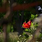 Lonely Red Flower in a Bush by Wolf Sverak