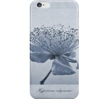 Hypericum calycinum Cyanotype iPhone Case/Skin