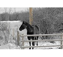 Cold But Hardy Photographic Print