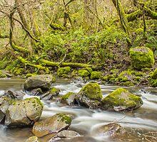 True Wilderness... by Chris Kean