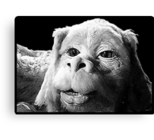 Falkor The Luck Dragon From The Neverending Story Design Canvas Print