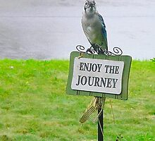Blue Jay, Enjoy Your Journey Sign, Life Is Good, Nature, Birds by lifeisgoodphoto