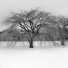 Winter Willow by SuddenJim