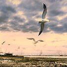Seagulls Dance at Sunset by Nigel Bangert