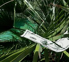 The Money Garden 1 by J. Lovewell