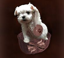 MALTESE PUPPY-JUST PLAYIN WITH MY YO-YO - I WONDER IS ANYBODY WATCHING LOL /PILLOW / TOTE BAG by ✿✿ Bonita ✿✿ ђєℓℓσ