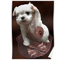 MALTESE PUPPY-JUST PLAYIN WITH MY YO-YO - I WONDER IS ANYBODY WATCHING LOL /PICTURE/CARD Poster