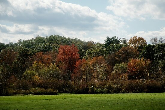 Autumn - One Tree at a Time by Barry Doherty
