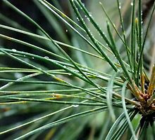 Pine Needles by farrahbear
