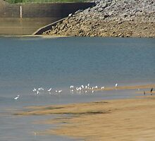 Herons On the Sandbar by WildestArt