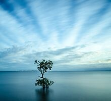 Mangrove Tree at Wellington Point by Ann Pinnock