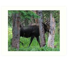 Moose in the Woods Art Print