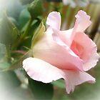 Gentle pink roses by Ana Belaj