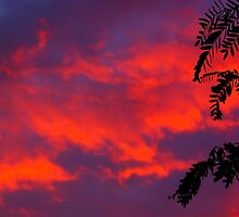 Neon Sunset Clouds by Nalinne Jones