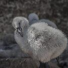 823 baby flamingo by pcfyi