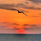 bird, sun and islands - pajaro, sol y islas by Bernhard Matejka