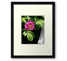 Lone Beach Rose Framed Print