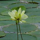 Lotus by WildestArt