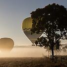 Mareeba Hot Air Ballooning 3 by Donna Rondeau